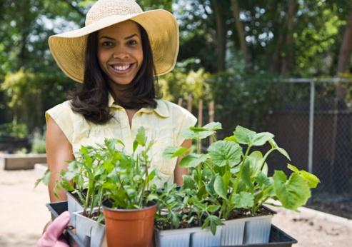 Gardening Ideas Candis