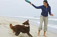 Tips for holidays with your dog