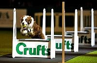 Get set for Crufts!