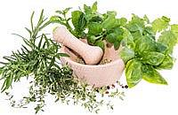 Top tips for fresh herbs