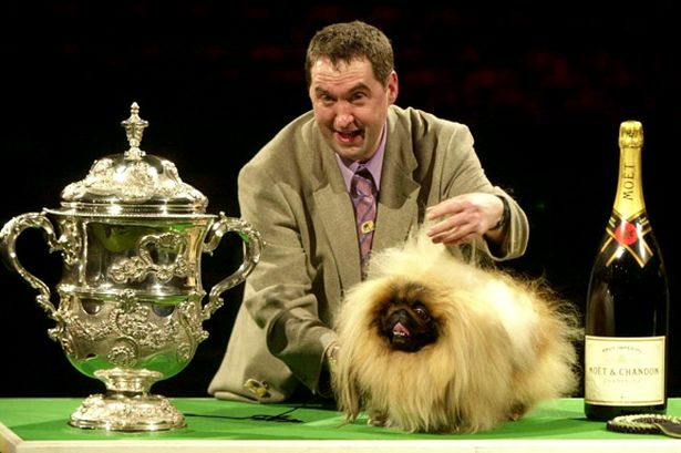 Owner Albert Easdon with three-year-old Pekingese dog, Danny, after he was named Best in Show in 2003. 'Most startled in show' would have worked too.