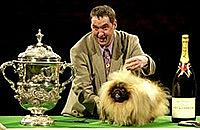 Five crazy Crufts dogs