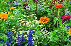 Summer-Photo---flower-bed