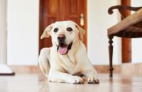 Doggy talk: how to understand your dog