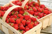 July 2020 FFER – 10 FREE* 'Cambridge Favourite' Strawberry Runners