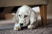 Pet Clinic, anxious pets