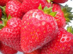 Buddy strawberry